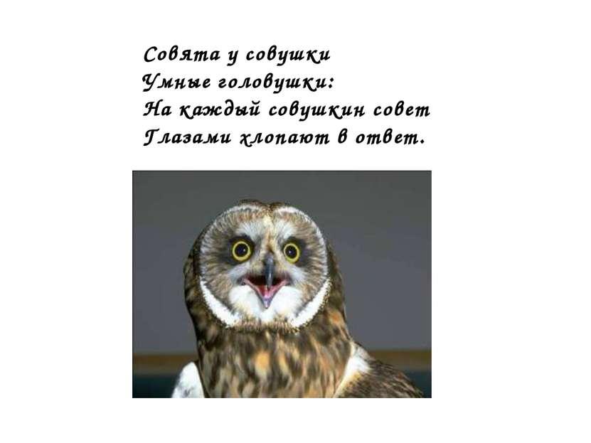 Совята у совушки Умные головушки: На каждый совушкин совет Глазами хлопают в ...