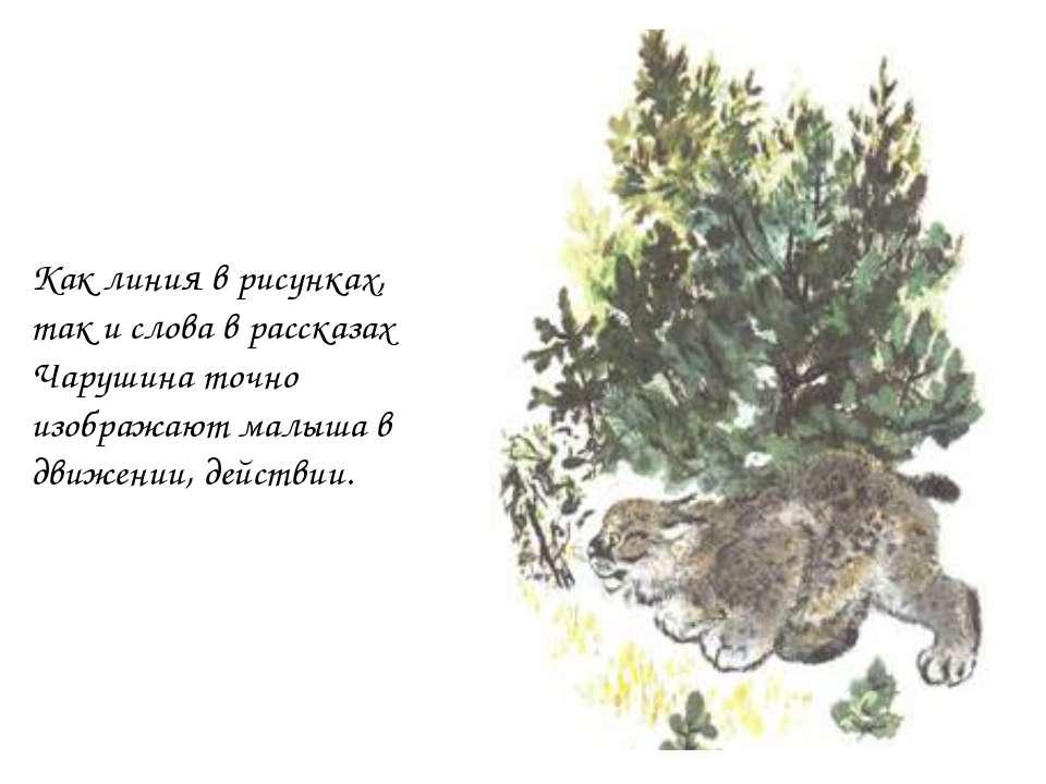Как линия в рисунках, так и слова в рассказах Чарушина точно изображают малыш...