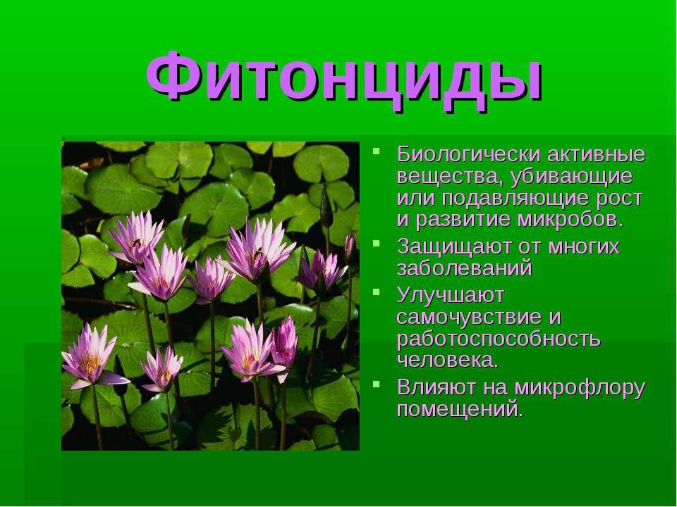 Фитонциды Биологически активные вещества, убивающие или подавляющие рост и ра...