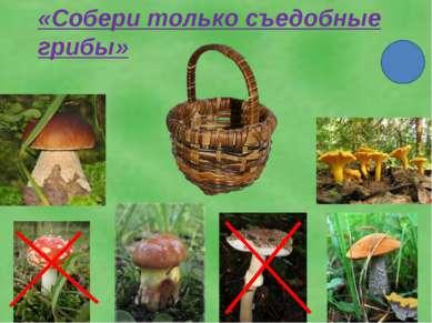 «Собери только съедобные грибы»