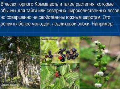 В лесах горного Крыма есть и такие растения, которые обычны для тайги или сев...