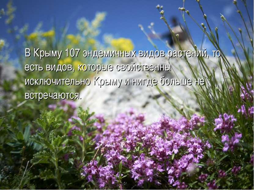 В Крыму 107 эндемичных видов растений, то есть видов, которые свойственны иск...
