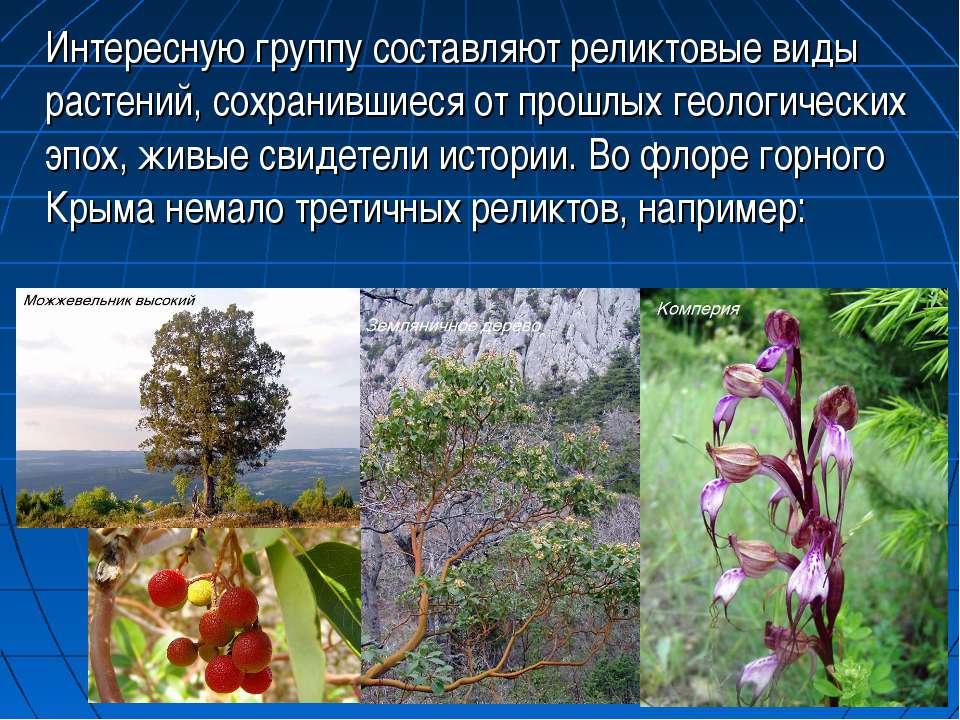 Интересную группу составляют реликтовые виды растений, сохранившиеся от прошл...