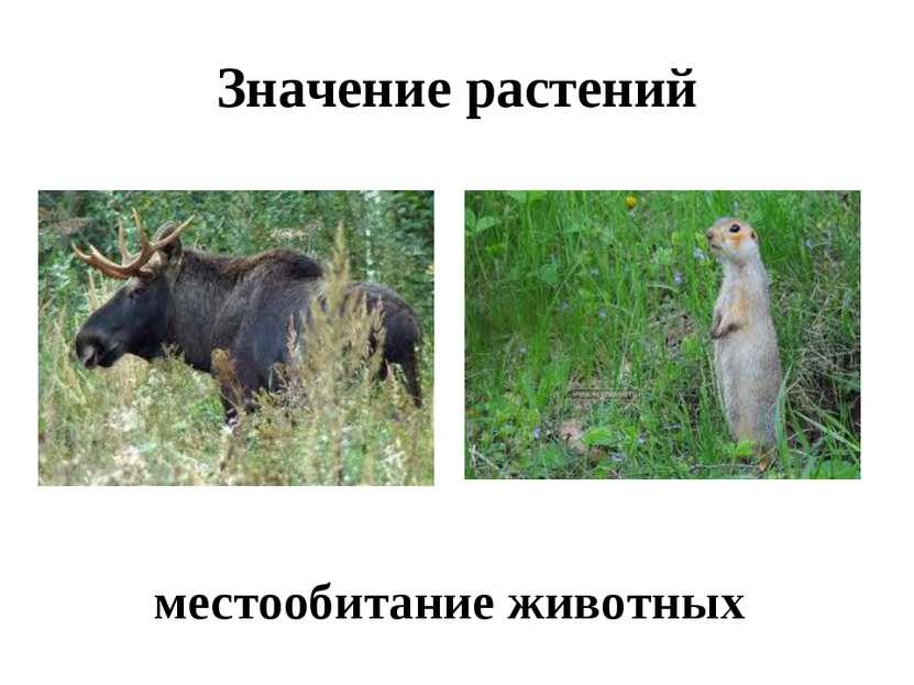 Значение растений местообитание животных