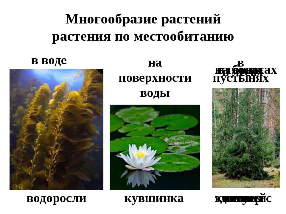 Многообразие растений растения по местообитанию в воде водоросли на поверхнос...