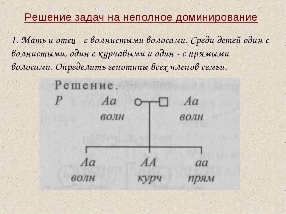 Решение задач на неполное доминирование 1. Мать и отец - с волнистыми волосам...