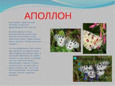 АПОЛЛОН Карл Линней , давая названия бабочкам, выбрал имя древнегреческого бо...