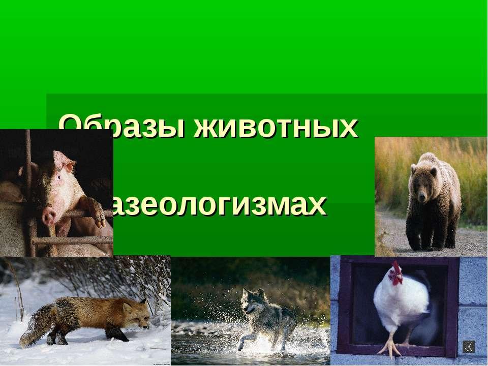 Образы животных во фразеологизмах
