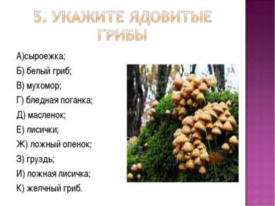 А)сыроежка; Б) белый гриб; В) мухомор; Г) бледная поганка; Д) масленок; Е) ли...