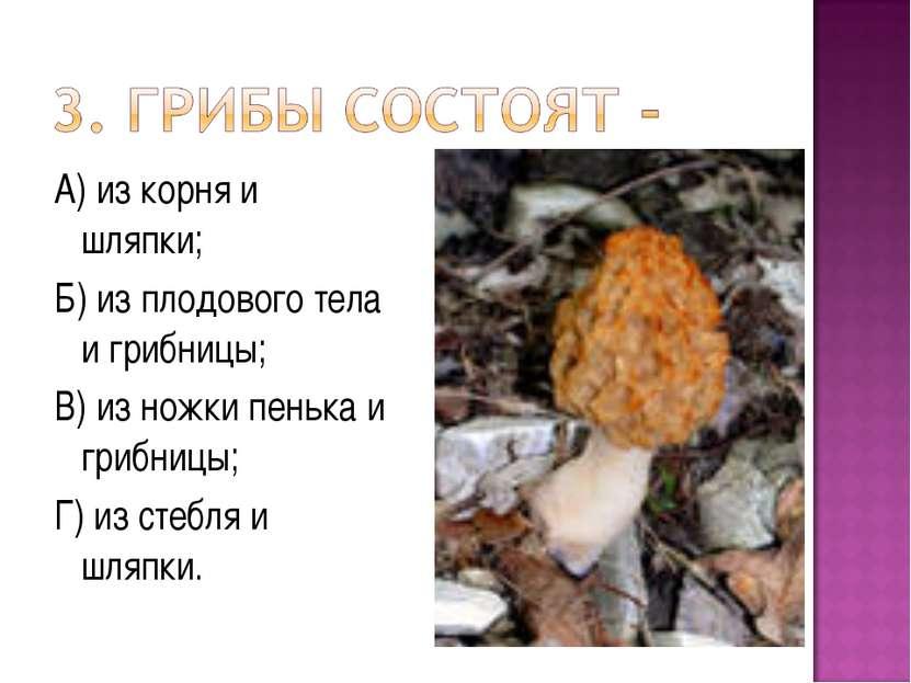А) из корня и шляпки; Б) из плодового тела и грибницы; В) из ножки пенька и г...