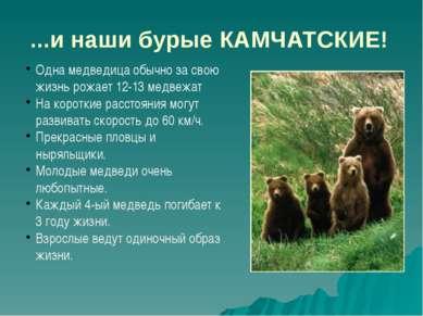 ...и наши бурые КАМЧАТСКИЕ! Одна медведица обычно за свою жизнь рожает 12-13 ...