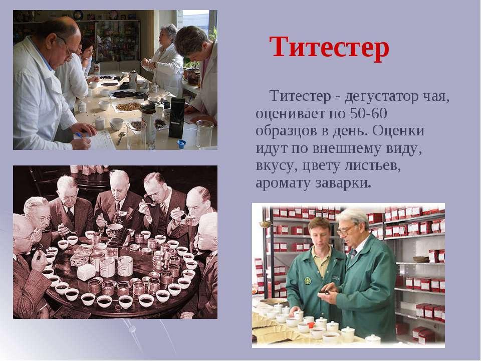 Титестер Титестер - дегустатор чая, оценивает по 50-60 образцов в день. Оценк...