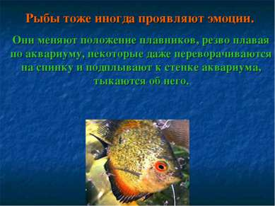 Рыбы тоже иногда проявляют эмоции. Они меняют положение плавников, резво плав...