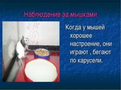 Наблюдение за мышками Когда у мышей хорошее настроение, они играют , бегают п...