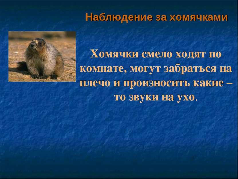 Наблюдение за хомячками Хомячки смело ходят по комнате, могут забраться на пл...