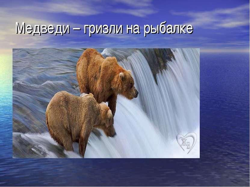 Медведи – гризли на рыбалке
