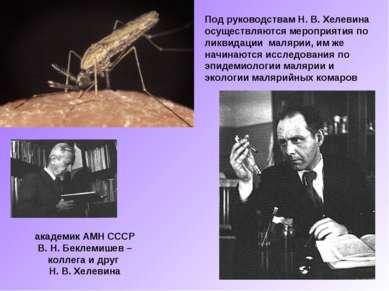 Под руководствам Н. В. Хелевина осуществляются мероприятия по ликвидации маля...