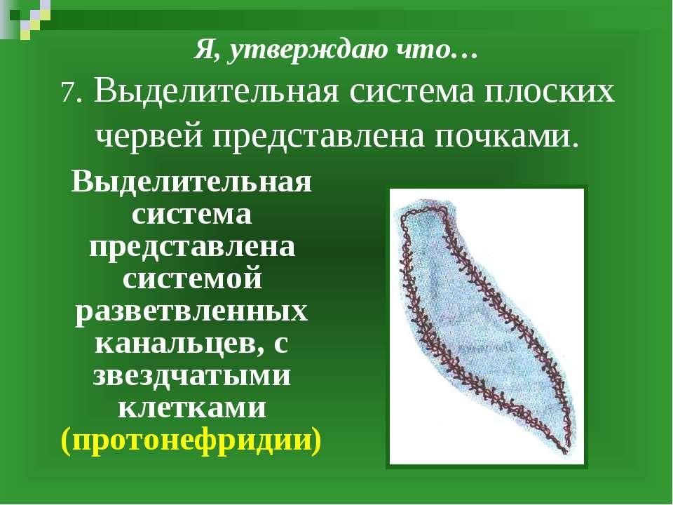 Я, утверждаю что… 7. Выделительная система плоских червей представлена почкам...