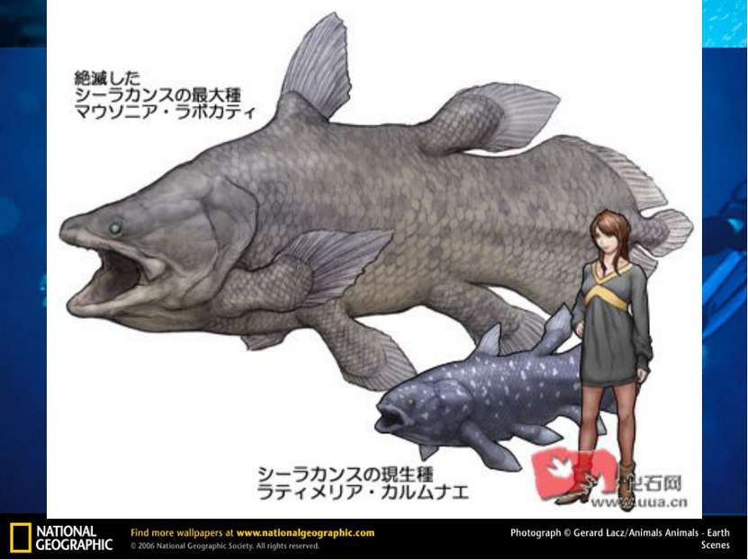 Кистеперая рыба