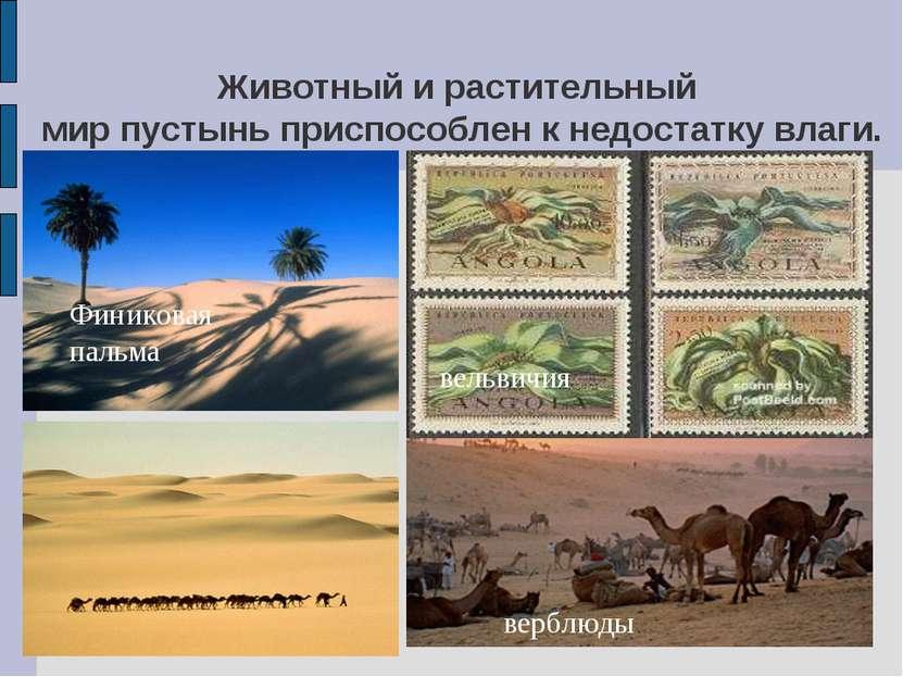 Животный и растительный мир пустынь приспособлен к недостатку влаги. Финикова...