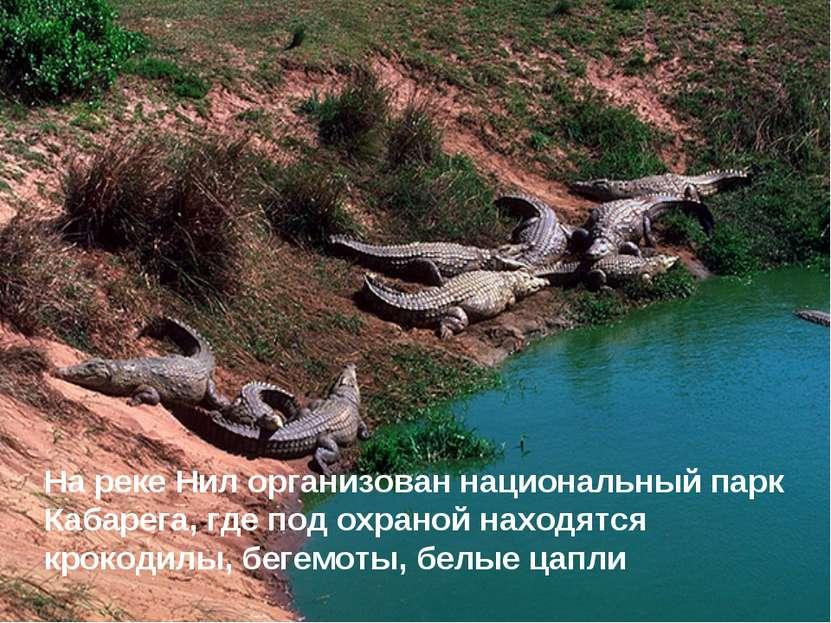 На реке Нил организован национальный парк Кабарега, где под охраной находятся...