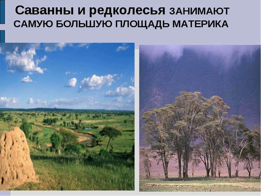 Саванны и редколесья ЗАНИМАЮТ САМУЮ БОЛЬШУЮ ПЛОЩАДЬ МАТЕРИКА