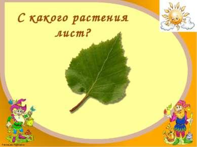 Берёза FokinaLida.75@mail.ru