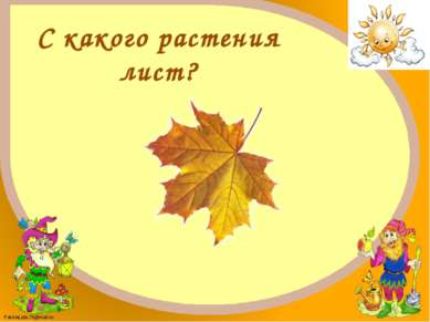 Клён FokinaLida.75@mail.ru