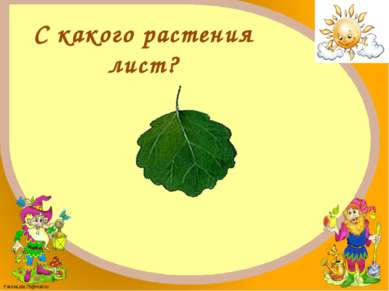 Осина FokinaLida.75@mail.ru