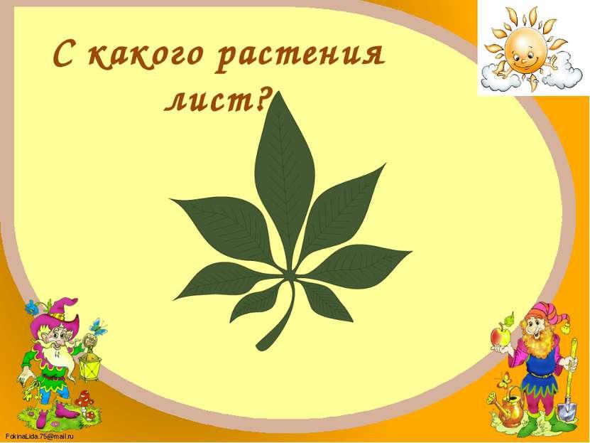 Каштан FokinaLida.75@mail.ru
