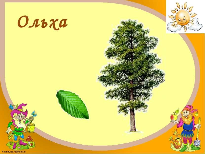 С какого растения лист? FokinaLida.75@mail.ru