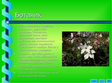 Ботаник Табак относится к семейству пасленовых, роду табак (никотина).Обычно ...