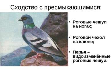 Сходство с пресмыкающимися: Роговые чешуи на ногах; Роговой чехол на клюве; П...