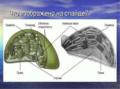 Что изображено на слайде?