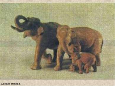 Семья слонов.